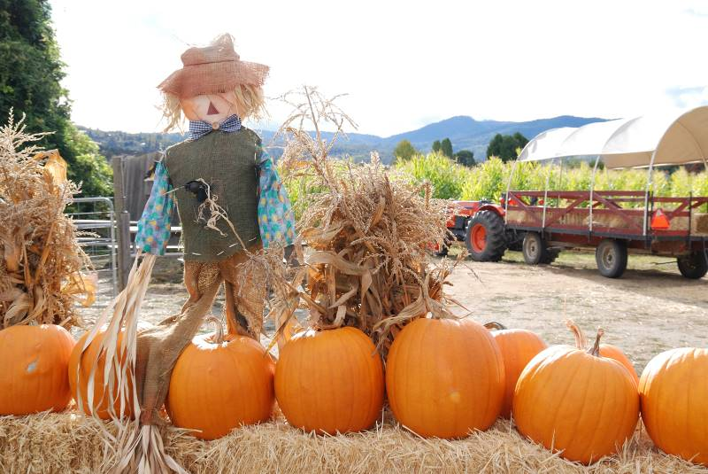 Kansas City pumpkin patch - scarecrow
