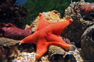 Discount on Advance Tickets to Sea Life Aquarium