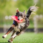 Fun for All at Dogtober Fest Oct.17