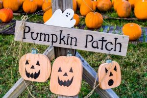 Kansas City Pumpkin Patches, Corn Mazes & Hayrides