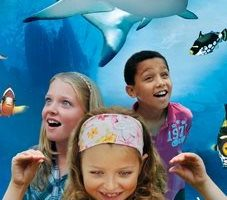 Sea Life Aquarium Discount for Scouts