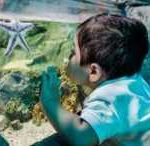 Discount on Tickets to Sea Life Kansas City