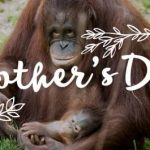 Free Admission to the Kansas City Zoo for Moms on Mother's Day