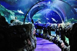 Discount on Tickets to Sea Life Kansas City