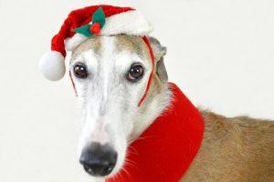 Photos with Santa in Kansas City - dog with Santa hat