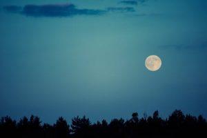 Full Moon Walk at Overland Park Arboretum