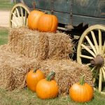 Kansas City Fall Festivals