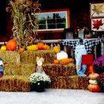 Amish Charm at Jamesport Heritage Days Festival