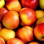 Enjoy All Things Apple at Weston Applefest