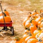 Sunflower House Hosts Free Pumpkin Palooza