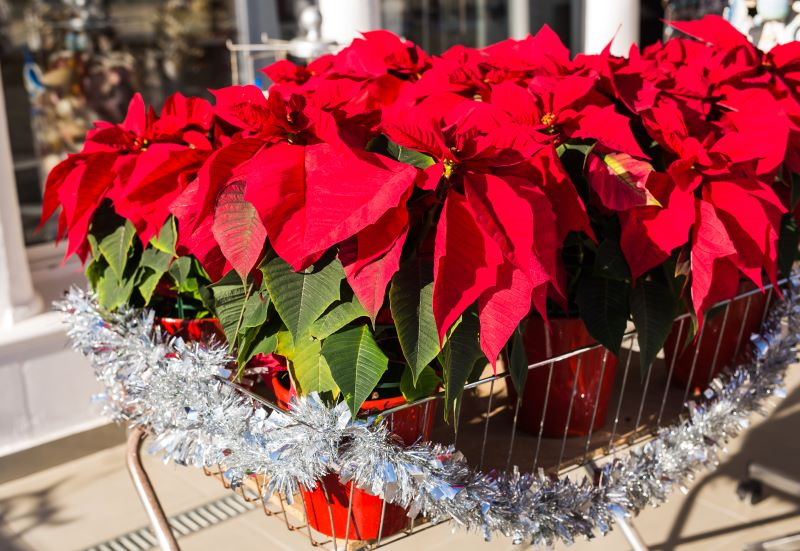 Kansas City Holiday Markets, Bazaars and Craft Fairs - Poinsettas