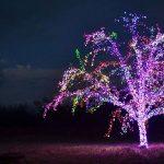 Magic Tree in Lee's Summit