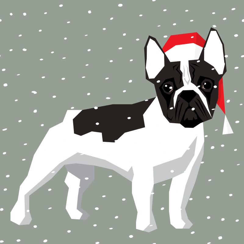 Pet photos with Santa in Kansas City - French bulldog with Santa hat