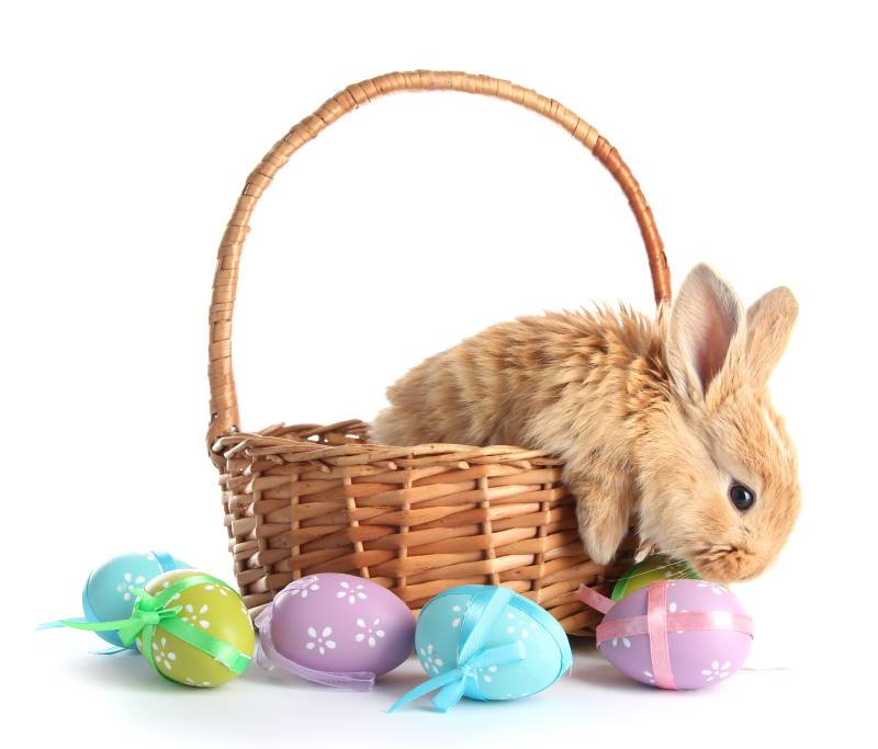 Easter Egg Hunts & Events in Kansas City - bunny in a basket