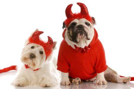 Dog friendly Halloween events in Kansas City